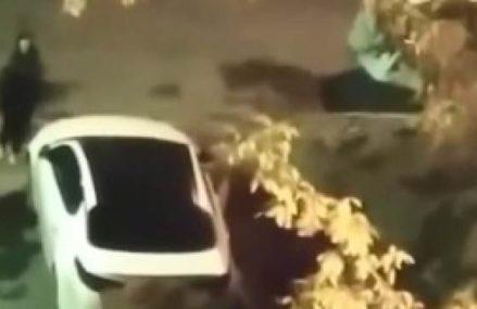 Видео: москвичка закидала камнями неправильно припаркованное авто