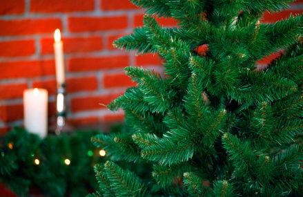 «Ёлки-иголки»: в экоцентрах Москвы научат праздновать Новый год, не вырубая елей