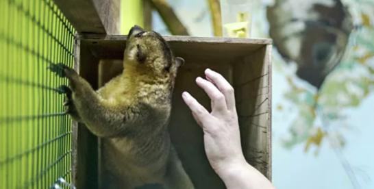В «Сокольниках» приостановили работу контактного зоопарка