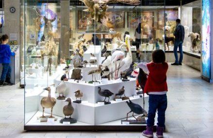 Куда сходить бесплатно в Москве в 2020 году: музеи, кинопоказы и экскурсии