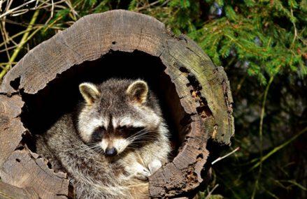 В Соколиной Горе спасли хищника, забравшегося на дерево