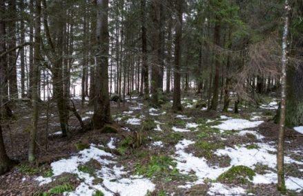 Мосприрода подготовила виртуальную экскурсию по Терлецкому лесопарку
