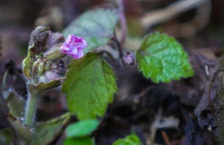 Распустившиеся в Москве цветы не погибнут от наступивших холодов