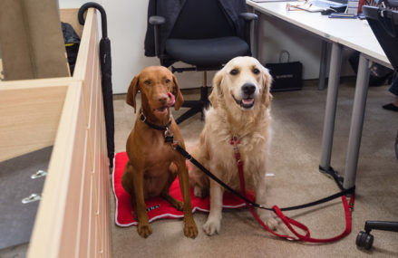Предприимчивые москвичи нашли способ заработать на собаках во время карантина