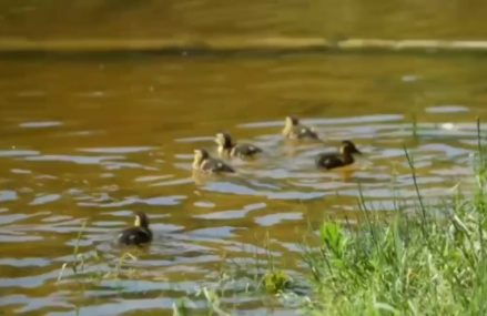 «Мосприрода» приглашает на виртуальную прогулку по живописным берегам реки Серебрянки
