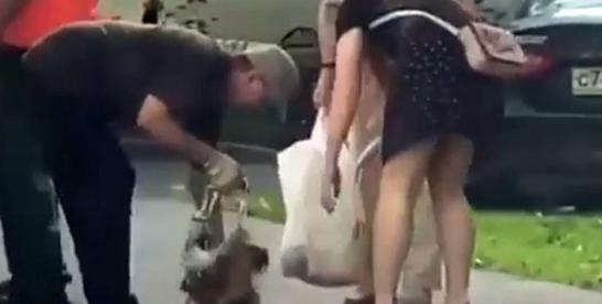В Сокольниках неизвестные обмотали йорка скотчем и бросили в мусорный бак (видео)