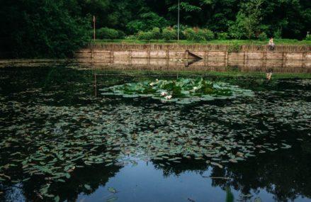 А вы знали, что тропа здоровья, проходящая по лесопарковой зоне, появилась в Сокольниках еще в 1980 году?