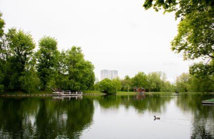 Онлайн программа в парках: 6 — 12 июля