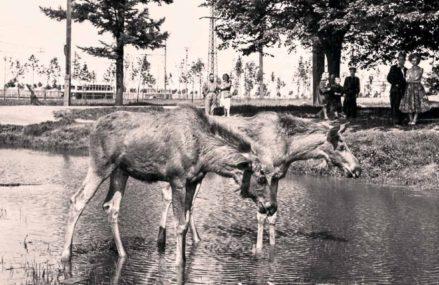 Измайловский парк: от вотчины царя до крупнейшего парка столицы