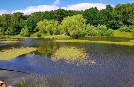 Волонтеры из Гольянова почистят Бабаевский пруд