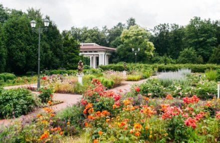 С 1 августа в парке «Сокольники» после капитального ремонта открывается Большой розарий!