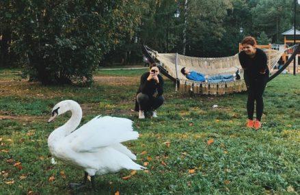На Золотом пруду в парке «Сокольники» уже второе лето живет белый лебедь по кличке Дуся