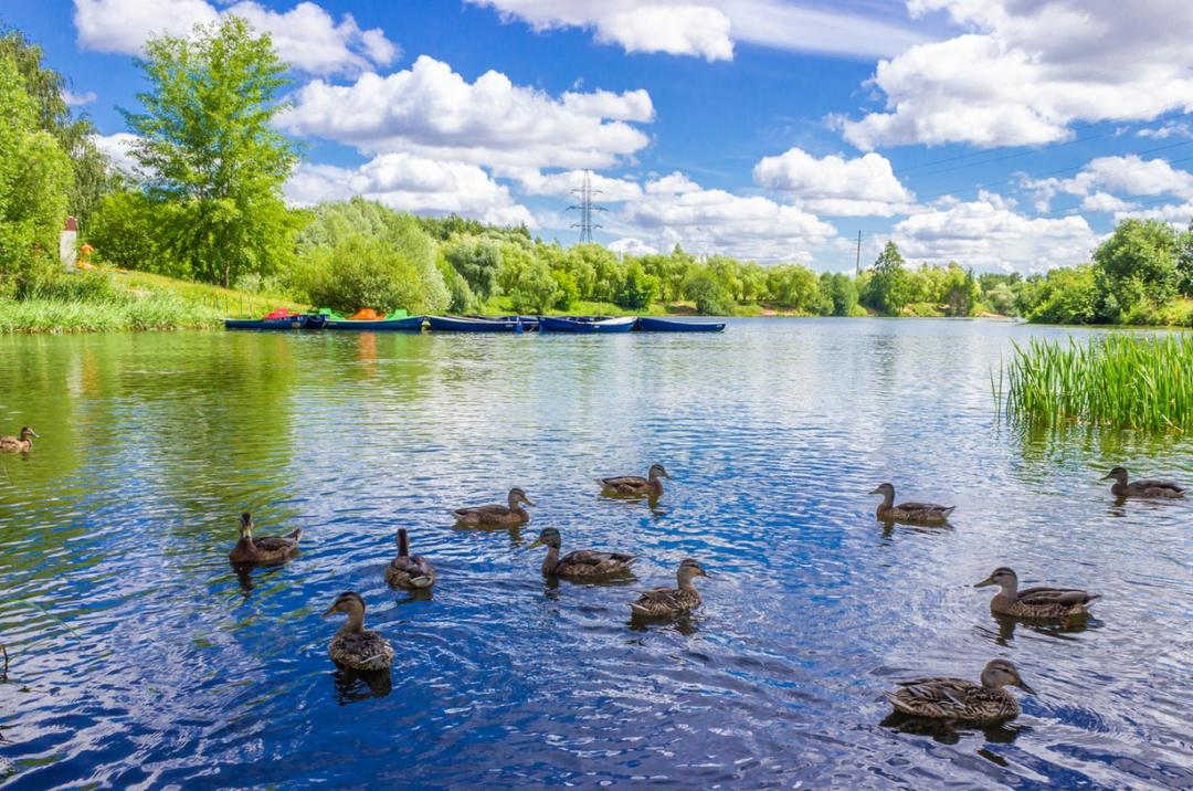 парк в Митино Пенягинский пруд