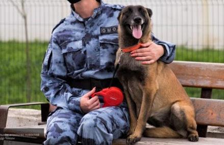 Собака в Москве отыскала грабителя аптеки