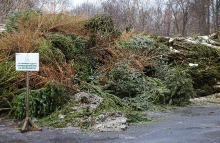Ёлочный круговорот: Мосприрода скорректировала график работы пунктов приёма новогодних деревьев