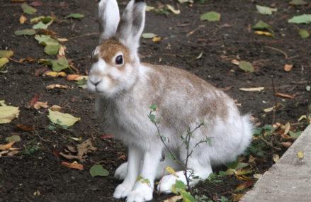Накормим ушастых: Мосприрода запускает акцию «Сытый заяц» — 2021
