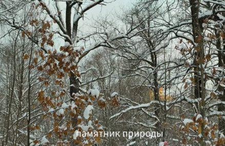 """Памятник природы """"Дубняк лещиновый""""."""