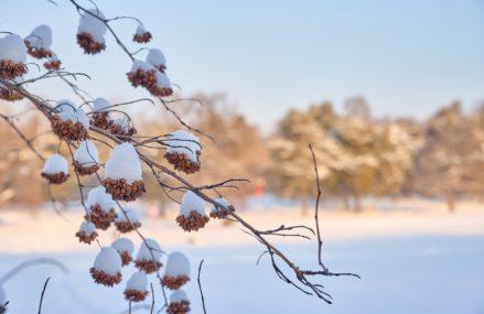 Культурно-досуговая программа в парках Москвы с 22 по 28 февраля