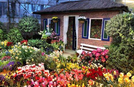 В «Аптекарском огороде» открылась VII ежегодная выставка «Репетиция весны».