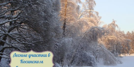 «Заповедные территории» Москвы: Природно-исторический парк «Косинский»