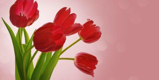 Посетительницам Измайловского парка и «Сокольников» 8 марта подарят цветы