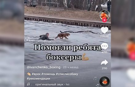 В Сокольниках спасли провалившуюся под лед собаку