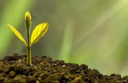 Жители Восточного Измайлова смогут подать заявку на высадку именных деревьев