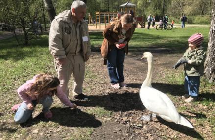 Звезда по имени Дусик: лебедь из парка «Сокольники» стал любимцем социальных сетей