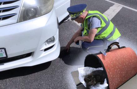 В Москве сотрудники ЦОДД спасли забравшегося под капот автомобиля котенка