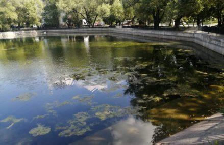 В Вешняках до конца недели обещают очистить от водорослей пруд на улице Красный Казанец
