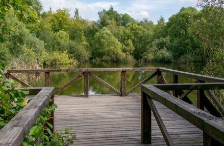 Заброшенные усадьбы и редкие растения: 10 парков, в которых вы еще не были